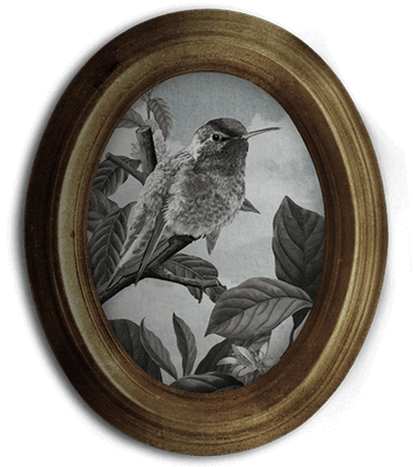 Round Framed Photo With Hummingbird Illustration